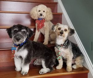Three therapy dogs posing on a staircase